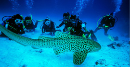 Andaman 6nights 7days